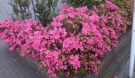 【街角レポート】6/9(火)花の名は。by青木崇